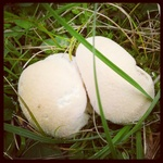0x341: Houby / Mushrooms (1)